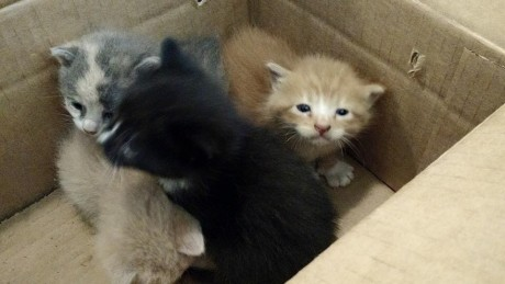 Abandoned Kittens - Panhandle Animal Shelter
