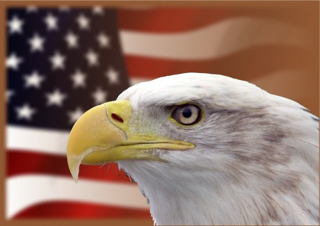 Bald Eagle American Flag - Public Domain