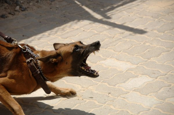 Angry-Dog-Public-Domain-600x398.jpg