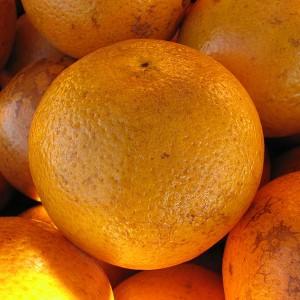 Florida Orange - Photo by Benjamin D. Esham