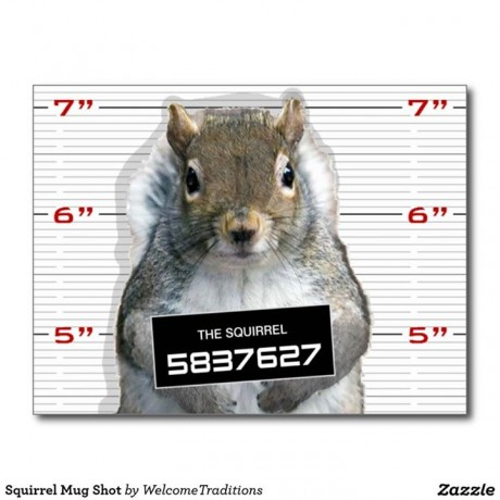 Squirrel Mug Shot - Facebook - Shelby Township Police Department